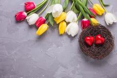 Dwa czerwonego serca w gniazdeczka, koloru żółtego, menchii i bielu tulipanach, kwitną Obraz Stock