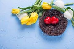 Dwa czerwonego serca w gniazdeczku i tulipanów kwiatach żółtych i białych Obrazy Royalty Free