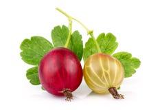 Dwa czerwony i żółci agresty z zielonymi liśćmi odizolowywającymi Fotografia Stock