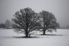 Dwa dębu w mgle Zdjęcia Royalty Free
