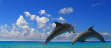 dwa delfiny Fotografia Royalty Free