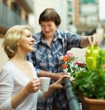 Dwa dojrzałej kobiety pije herbaty Obrazy Royalty Free