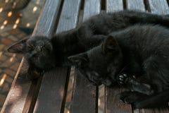 Dwa dosyć czarnej kiciuni śpi na ławce w letnim dniu Zdjęcia Royalty Free
