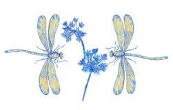 Dwa dragonflies błękitny i kwiaty w dekoraci projektują na bielu Zdjęcia Stock