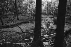 Dwa drzew ciemny stojak w drewnie i czekać na midday słońce - ranek fotografia stock