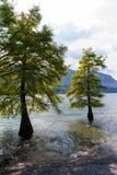 Dwa drzewa Obrazy Royalty Free