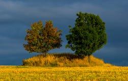 dwa drzewa Obraz Stock