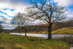 dwa drzewa Zdjęcia Stock