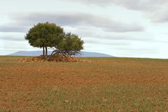 dwa drzewa Zdjęcie Stock
