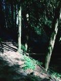 dwa drzewa Fotografia Stock