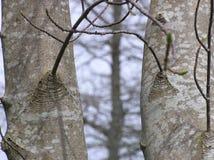 dwa drzewa Obrazy Stock