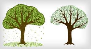 Dwa drzewa i spada liście Zdjęcia Stock