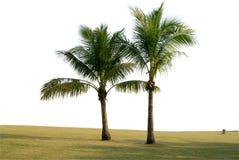 dwa drzewa kokosowe Zdjęcia Stock
