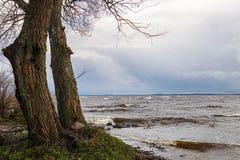 Dwa drzewa na morzu Zdjęcia Royalty Free