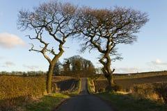 Dwa drzewa obramiają małą drogę Fotografia Royalty Free