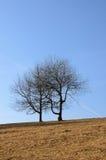 Dwa drzewa w polu Obraz Royalty Free