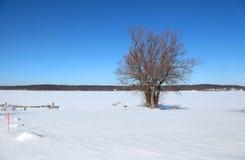 Dwa drzewa w zamarzniętym jeziorze Zdjęcie Royalty Free