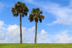 Dwa drzewka palmowego Obrazy Royalty Free
