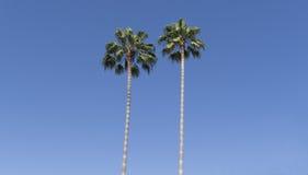 Dwa drzewka palmowego zdjęcie royalty free