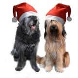 Dwa dużego psa z Santa Claus kapeluszami fotografia stock