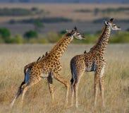 Dwa dzieci żyrafa w sawannie Kenja Tanzania 5 2009 Africa tana wschodnich maasai marszu spełniania Tanzania wioski wojowników Fotografia Royalty Free