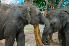 Dwa dzieci słoń Fotografia Royalty Free