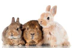 Dwa dziecka królik doświadczalny i króliki Zdjęcia Royalty Free