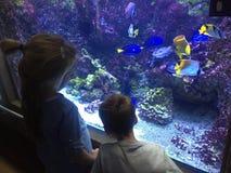 Dwa dziecka podziwia kolorowej egzot ryba w akwarium Fotografia Royalty Free