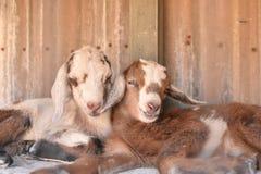 Dwa dziecko kózek cuddle obraz royalty free
