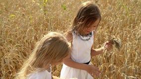 Dwa dziewczyn mały jasnogłowy stojak w polu złocista banatka Urocze dziewczyny w białych sukniach z pszenicznymi ucho w rękach zbiory