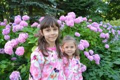 Dwa dziewczyny przeciw tłu kwitnie hortensja Obrazy Royalty Free