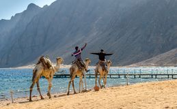Dwa egipskiej chłopiec jedzie wielbłąda zdjęcie stock