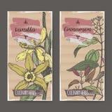 Dwa etykietki z wanilią, Cynamonowego koloru nakreślenie Kulinarni ziele inkasowi royalty ilustracja