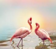 Dwa flaminga blisko nawadniają Zdjęcie Royalty Free