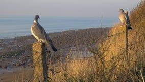 Dwa gołębia siedzą na filarach przeciw tłu brzeg i morze zbiory