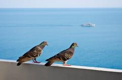 dwa gołębie Zdjęcie Royalty Free