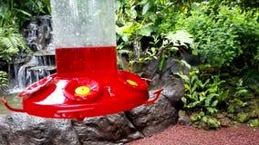 Dwa hummingbirds karmią wewnątrz dozownika przy losu angeles Paz siklawy ogródami w Costa Rica zbiory wideo