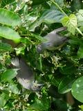 Dwa hummingbirds przy pracą obrazy stock