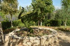 Dwa Iść na piechotę koń Odtwarzający W Paprociowej rzeźbie obraz stock