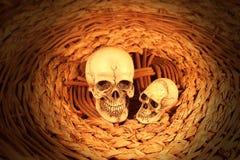 Dwa istot ludzkich czaszka Obrazy Royalty Free