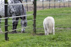 Dwa jeść konia Zdjęcie Royalty Free