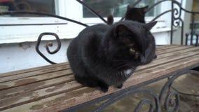 Dwa jednakowego czarnego kota relaksuje na ławce, odpoczywający, bawić się, śmieszni zwierzęta z ogonami zbiory
