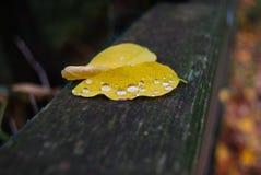 Dwa jesień liścia na drewnianym parapet zdjęcie royalty free