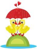 Dwa kaczka żółty parasol Zdjęcie Stock