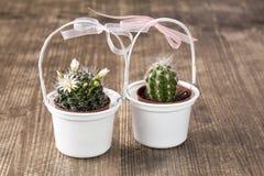 Dwa kaktusa dekorującego z łękami Zdjęcia Royalty Free