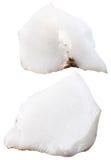 Dwa kawałka cacholong gemstones (milky opal) Zdjęcia Stock