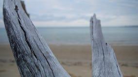 Dwa kilkuramienny driftwood w linii brzegowej zbiory