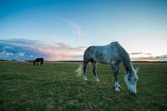 Dwa koń Zdjęcia Royalty Free