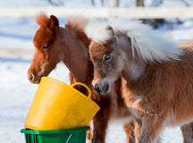 Dwa koń głowy w zima lesie. Obrazy Stock