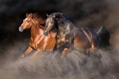 Dwa koń w pustynnej burzy zdjęcie royalty free